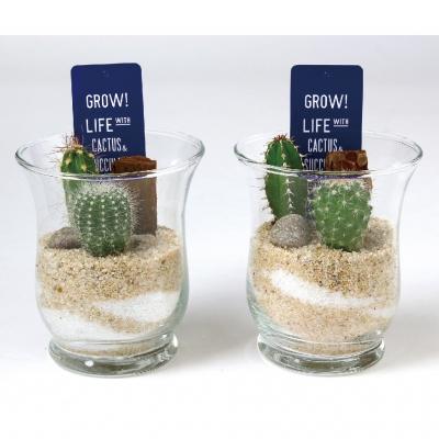 SPICE OF LIFE ミニガラスドーム サボテン植え込み Sサイズ