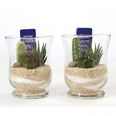 SPICE OF LIFE ミニガラスドーム サボテン植え込み Lサイズ