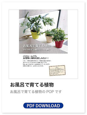 お風呂で育てる植物